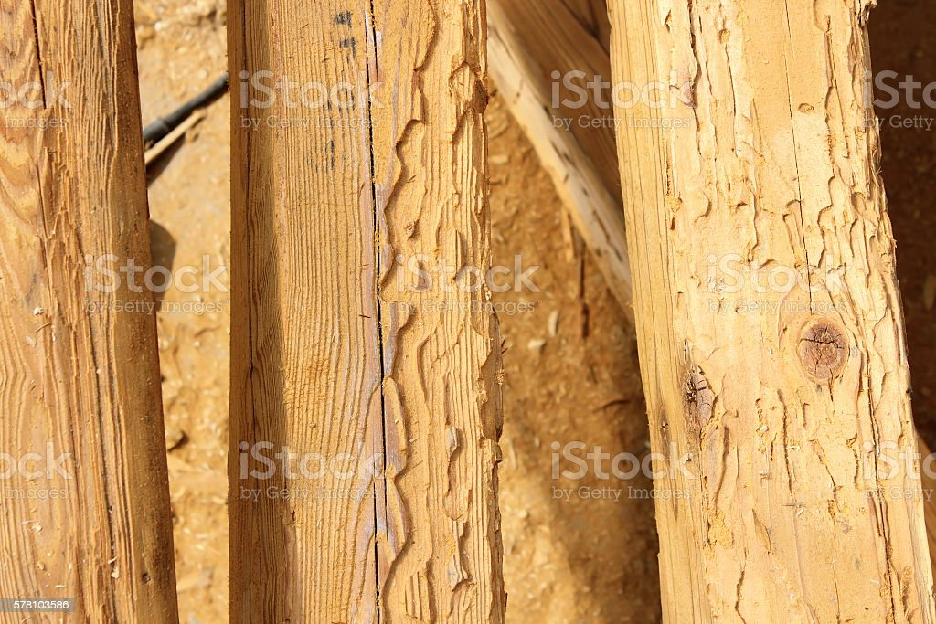 construction wooden beams destroyed by insect attack stock photo