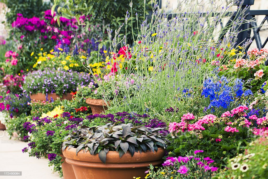 Container Flower Garden stock photo