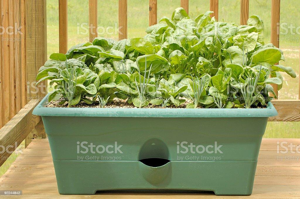 Container Gardening - Vegetables