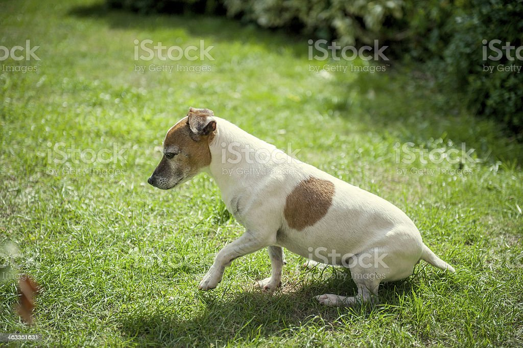 Contemplating Dog royalty-free stock photo