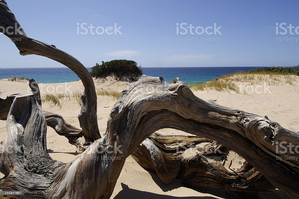 contorted branch on the sand dune royalty-free stock photo