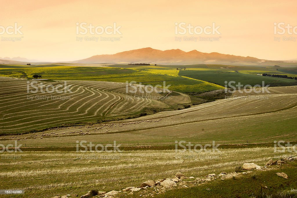 Contour plough orange hills and green fields royalty-free stock photo