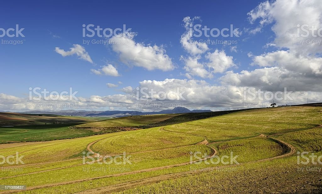 Contours in wheatfield near Caledon, South Africa stock photo