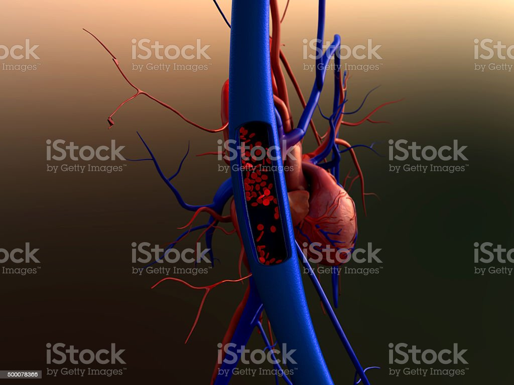 Contraction of blood vessels stock photo