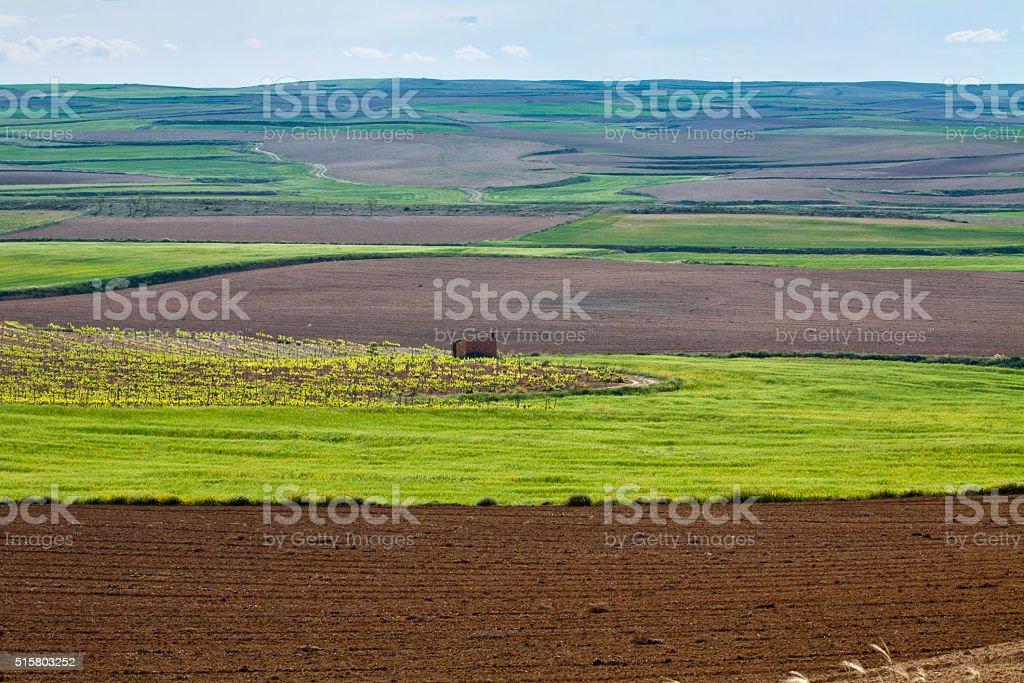 Contraste  en campo de cultivo stock photo