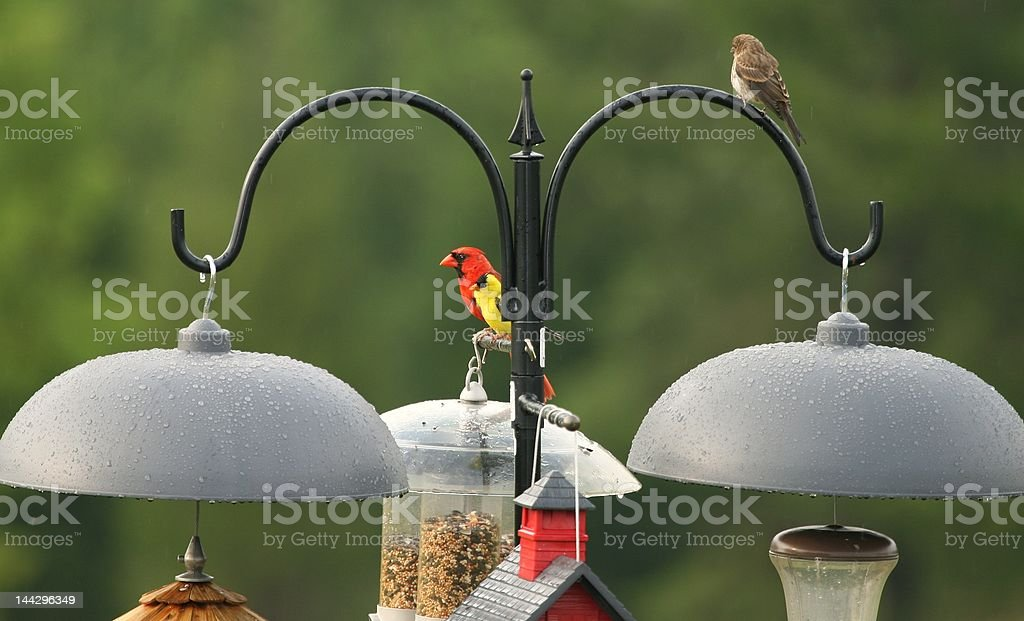 Contrasting birds perched together royalty-free stock photo