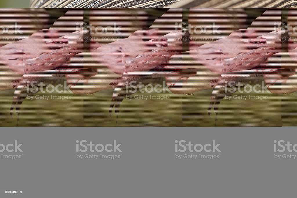 Control preparation of fish on the fishing farm. stock photo