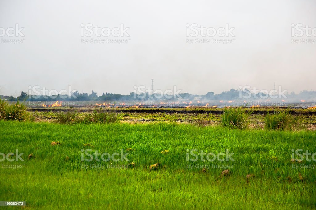 Controlled burn in a farm field royalty-free stock photo