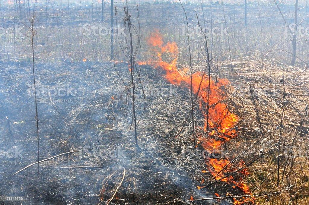 Controlled Burn stock photo