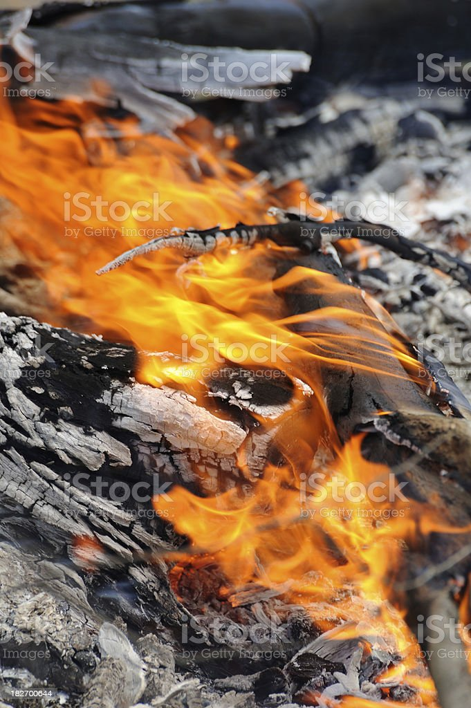 Controlled Forest Fires royalty-free stock photo