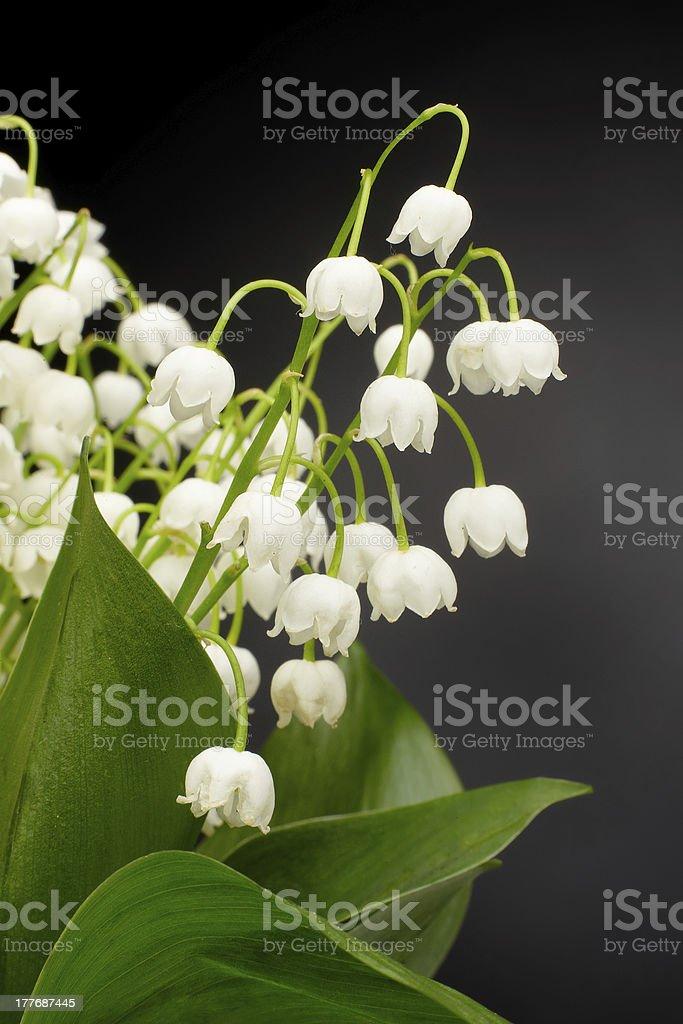 Convallaria majalis royalty-free stock photo