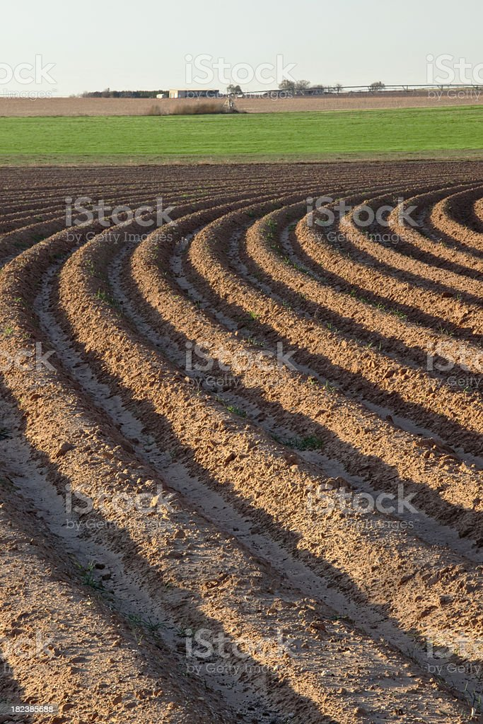 Converging Curved Furrows of Plowed Field Landscape stock photo