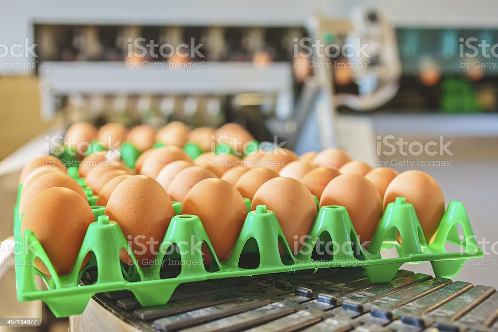 Conveyor belt transporting green crates of fresh eggs stock photo