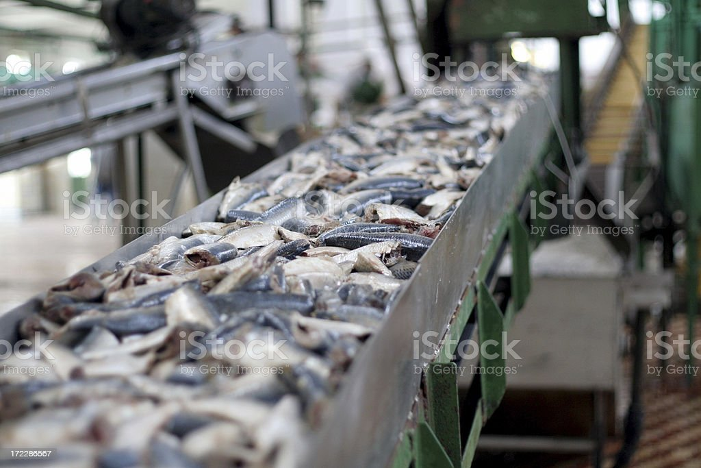 conveyor belt with fresh fish stock photo