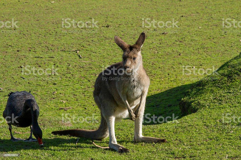 convivencia animales zbiór zdjęć royalty-free