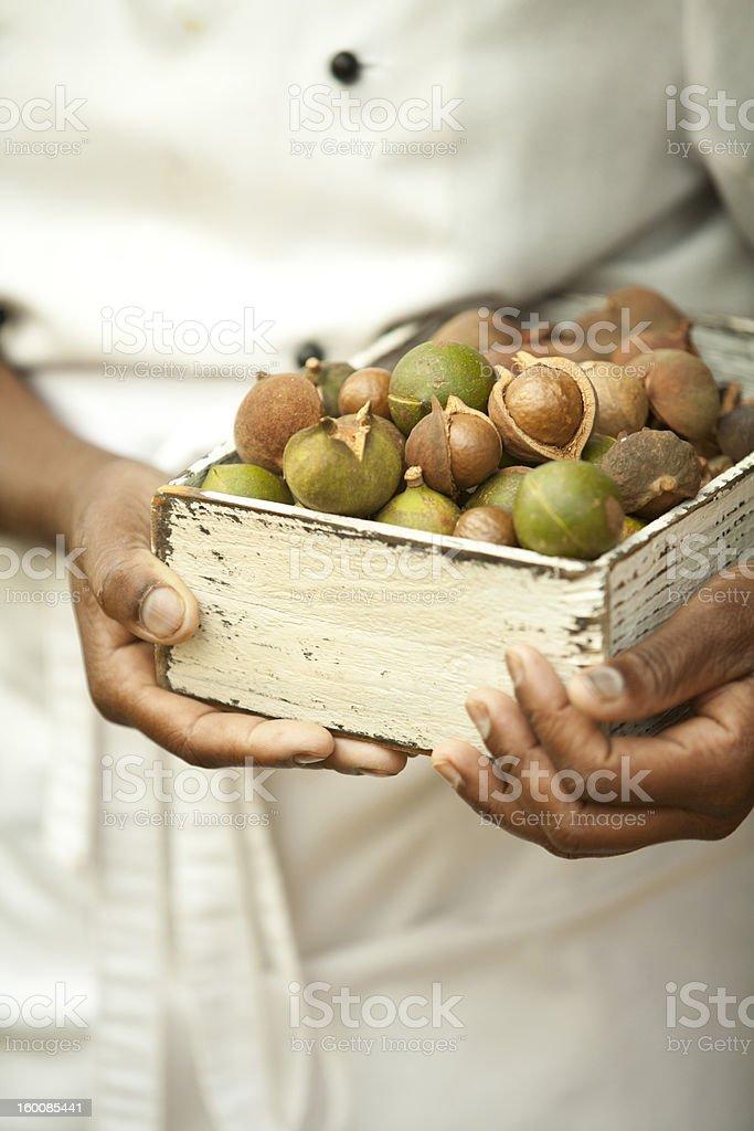 cook holdin box full of macadamia nuts stock photo