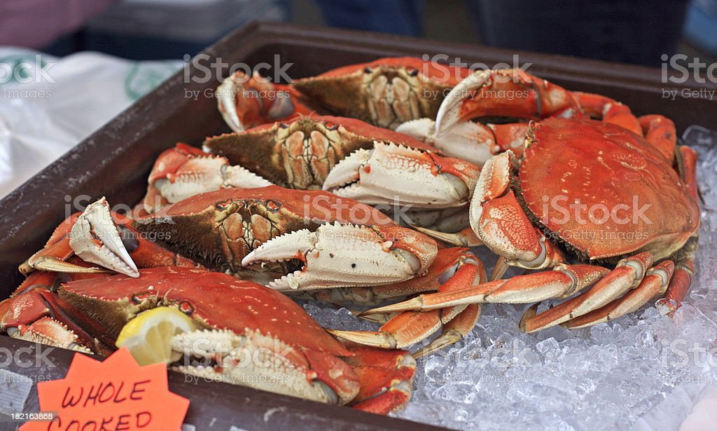Cooked Dungeness Crab stock photo