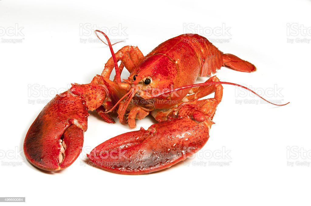 Cooked Lobster 2 stock photo