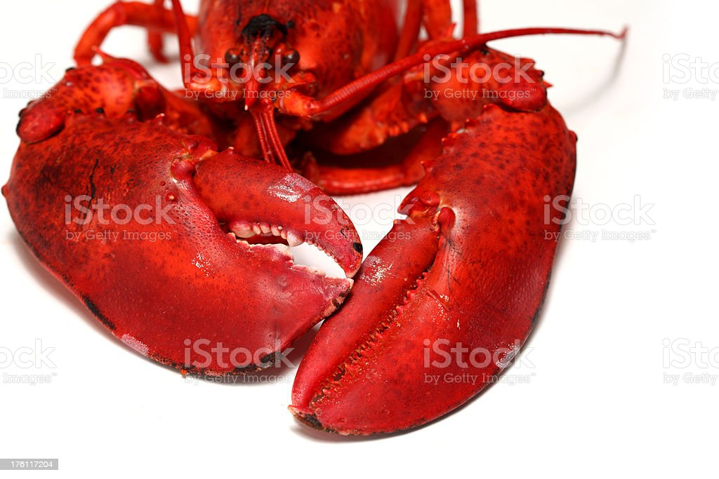 Cooked Lobster royalty-free stock photo