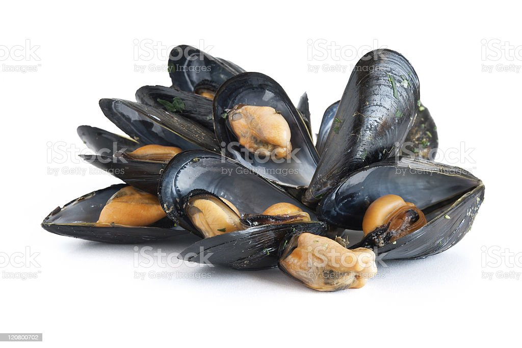 Cooked mussels on a white background stock photo