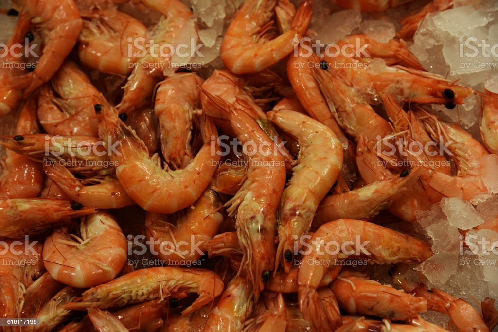 Cooked shrimp . stock photo