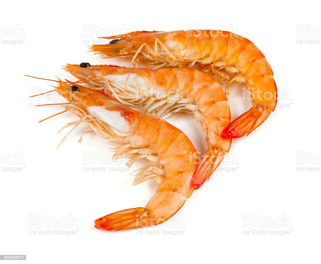 cooked shrimps isolated on white stock photo