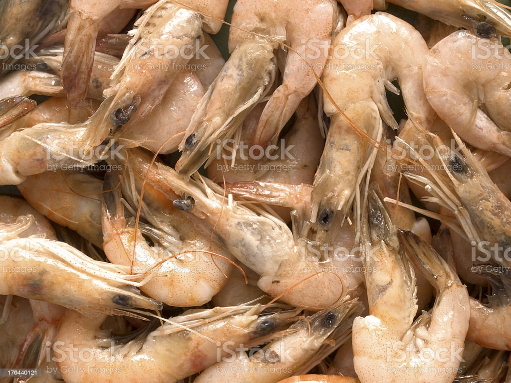 cooked shrimps royalty-free stock photo