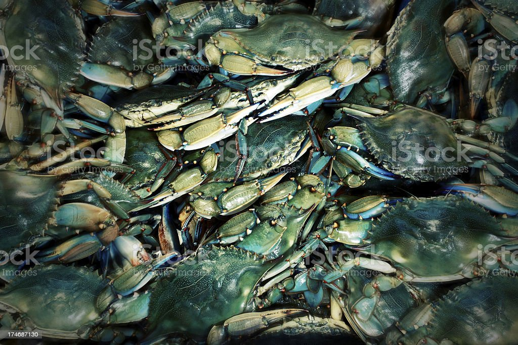 Cool Blue Crab Background Effect royalty-free stock photo