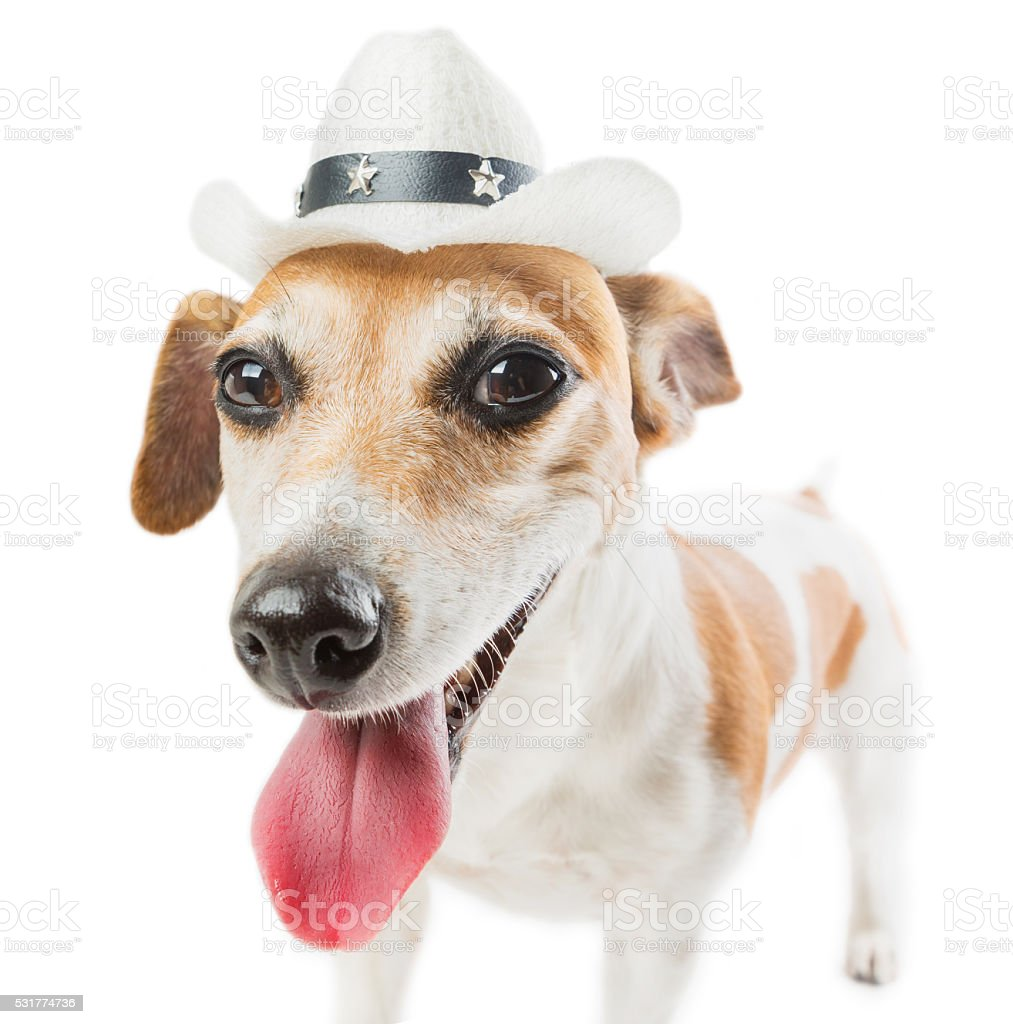 Cool Cowboy dog stock photo