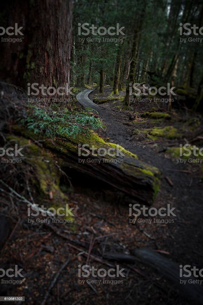 Cool dark rainforest. stock photo