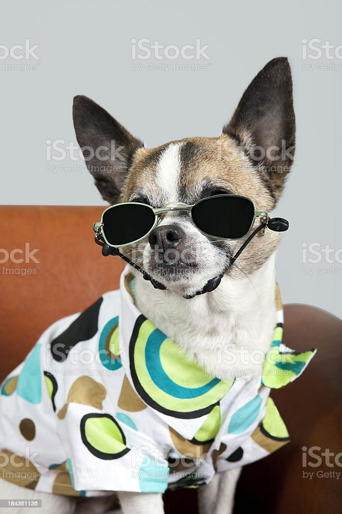 Cool Dog Dude stock photo