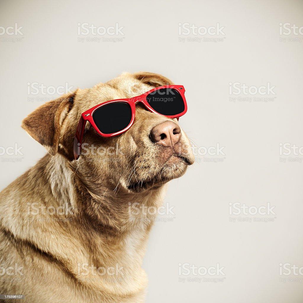 Cool dog stock photo