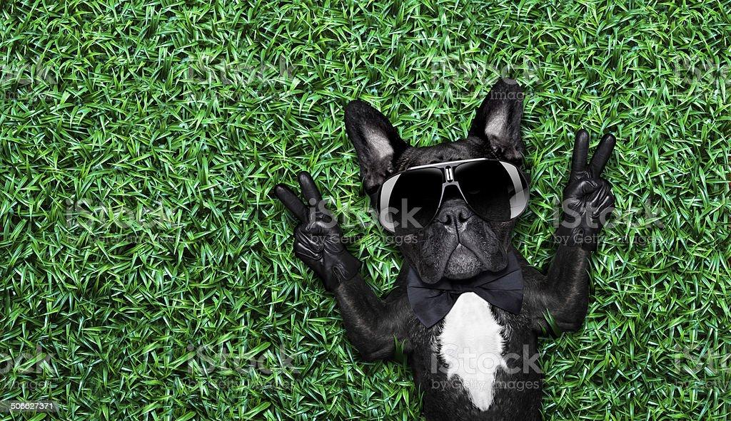 cool dog royalty-free stock photo