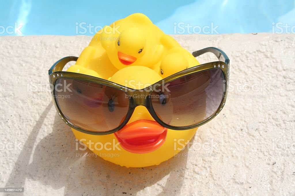 Cool Duck royalty-free stock photo