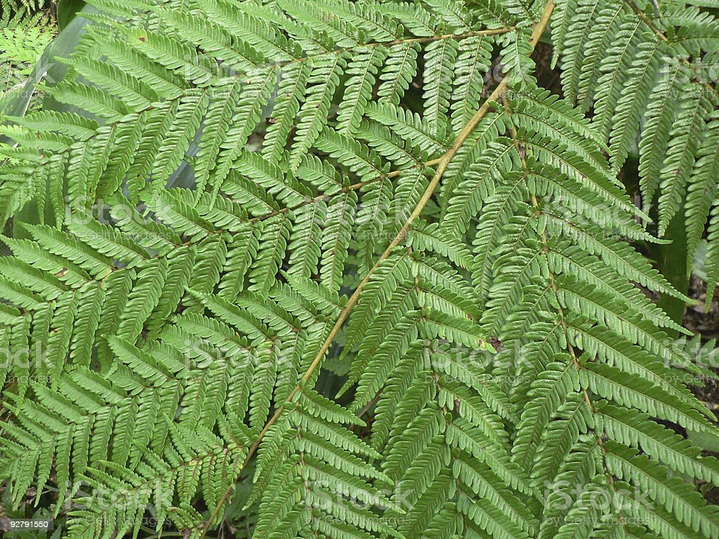 Cool green leaves royalty-free stock photo