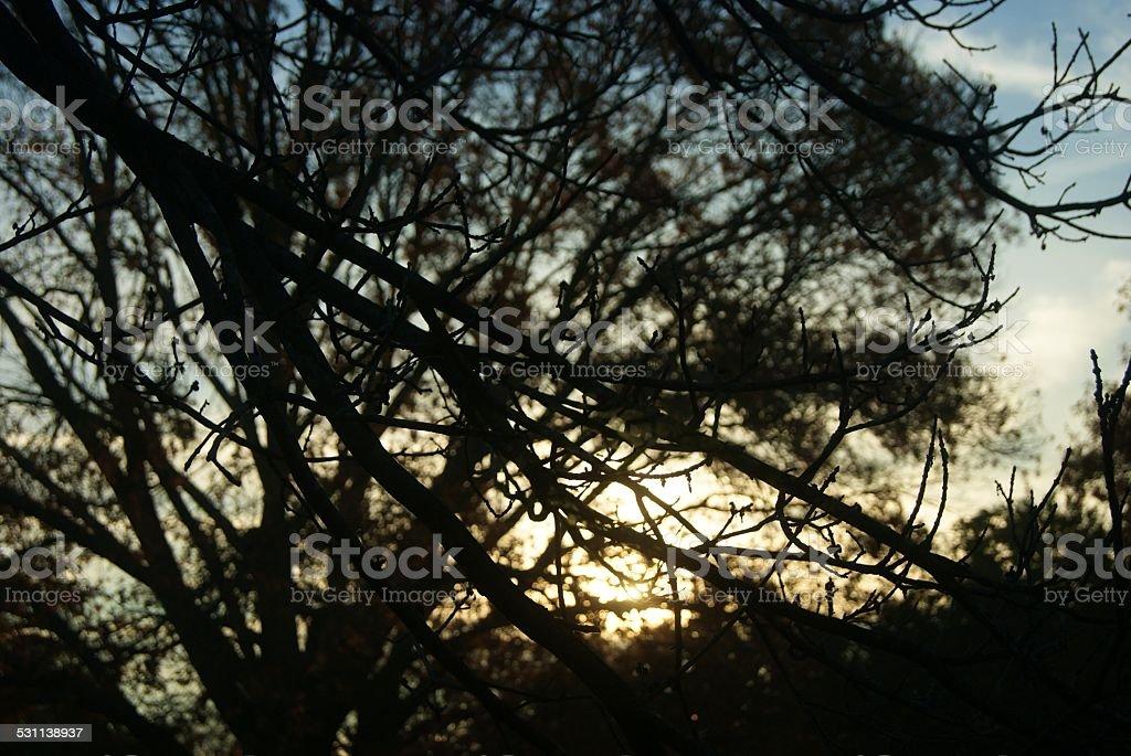 Cool Morning Sunrise royalty-free stock photo