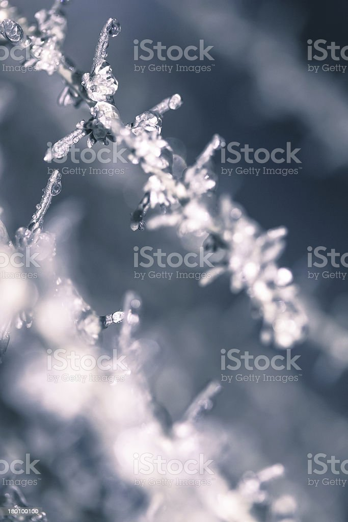 cool plant royalty-free stock photo