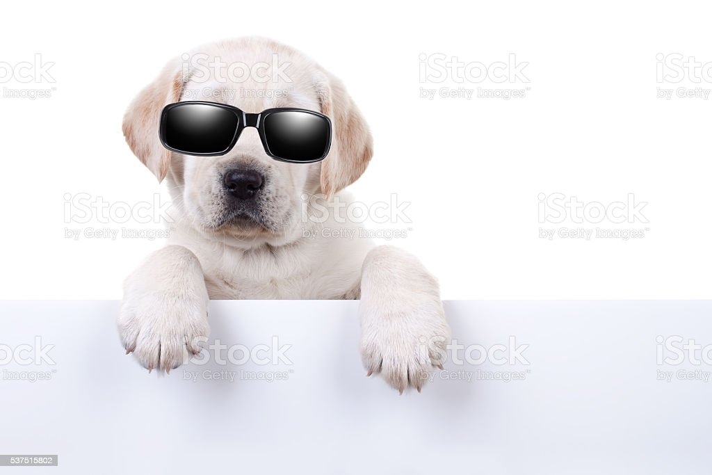 Cool Summer Holiday Dog Sign stock photo