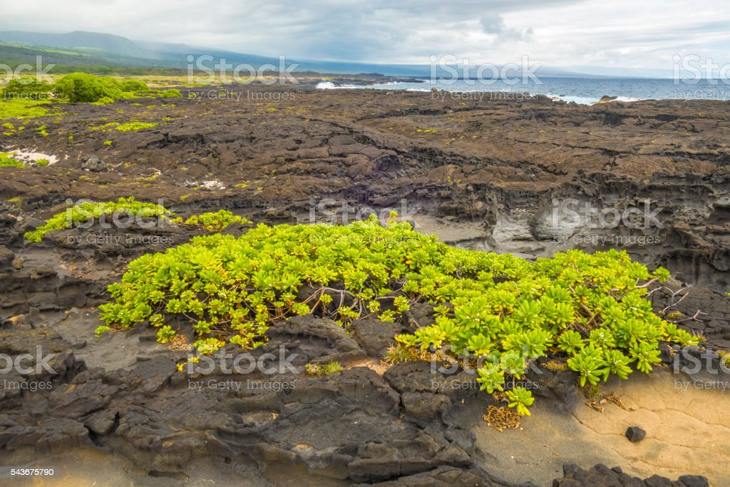 Cooled lava flow stock photo