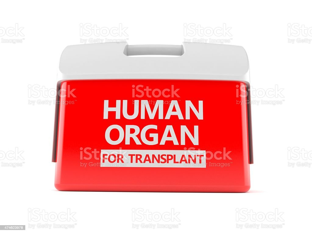 Cooler for human organ stock photo