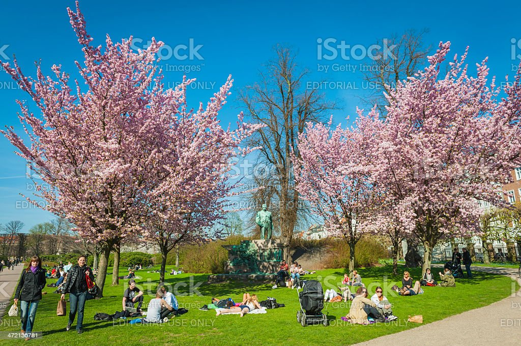 Copenhagen crowds enjoying spring blossom sunshine in the park Denmark stock photo