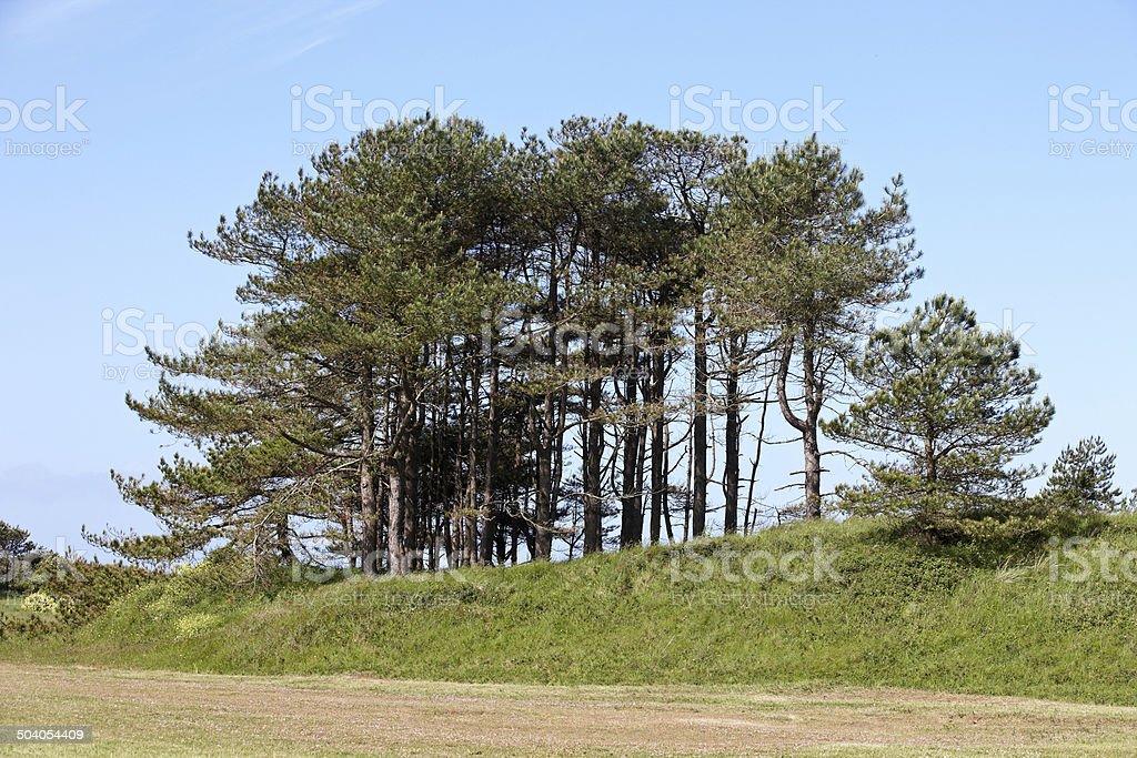 Copse of trees on green ridge royalty-free stock photo