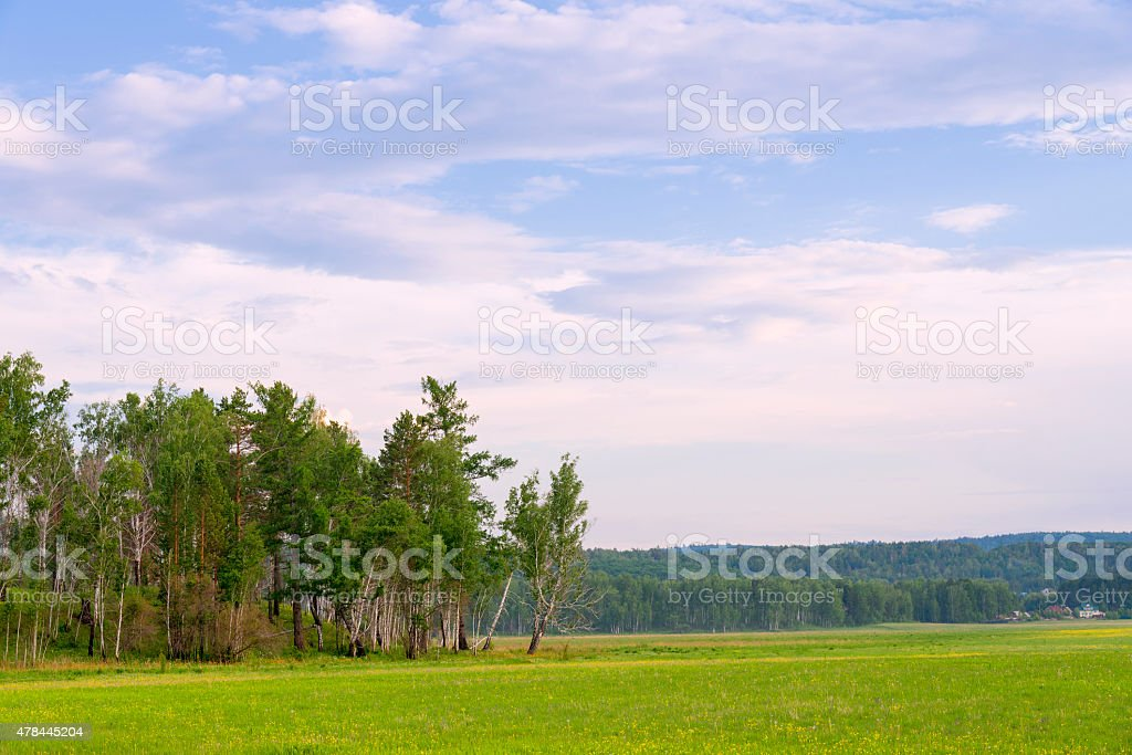 Copse stock photo