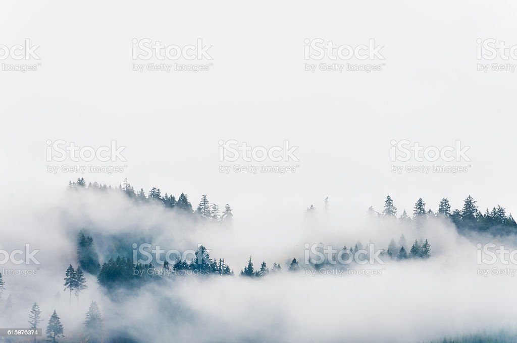 Copyspace Forrest hillside and low clouds. stock photo