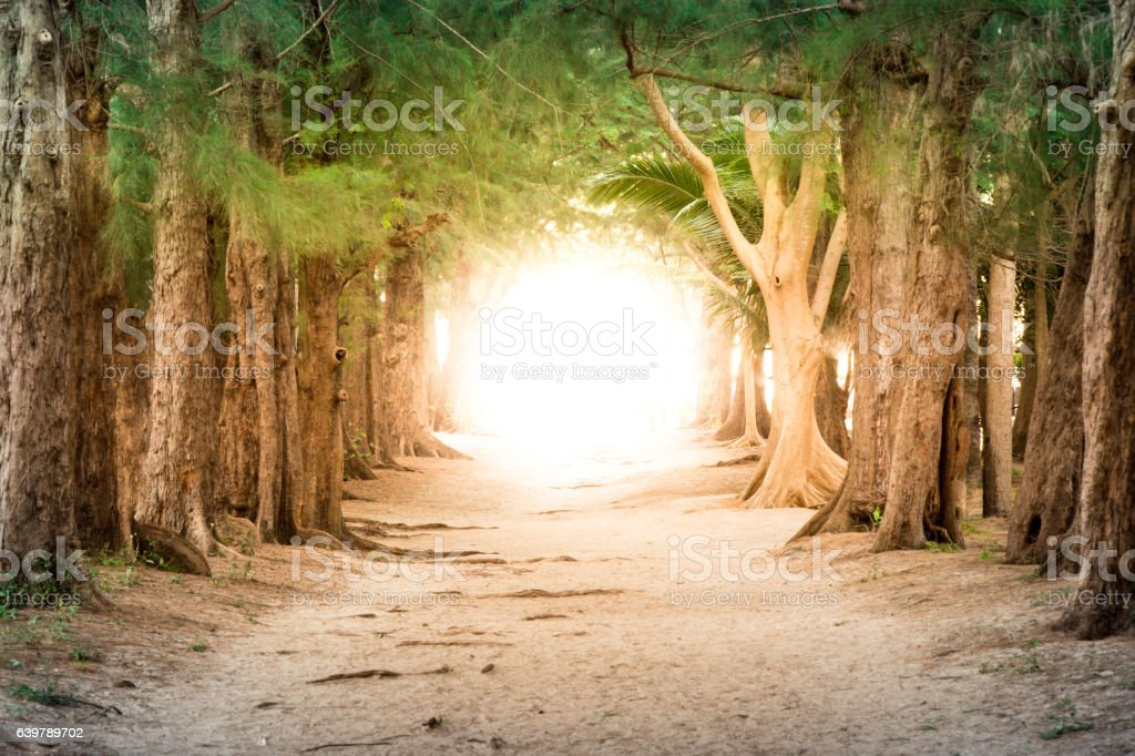 Copyspace photo show pathway to business success and total freed stock photo