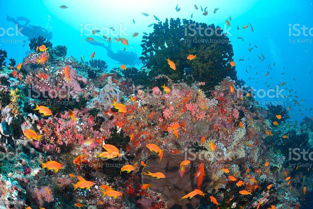 Corais e peixes e mergulhador foto de stock royalty-free