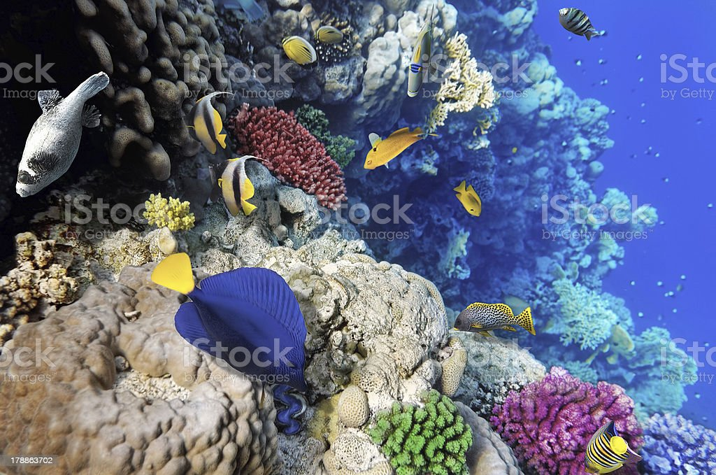 Coral and fish in the Red Sea. Egypt royalty-free stock photo