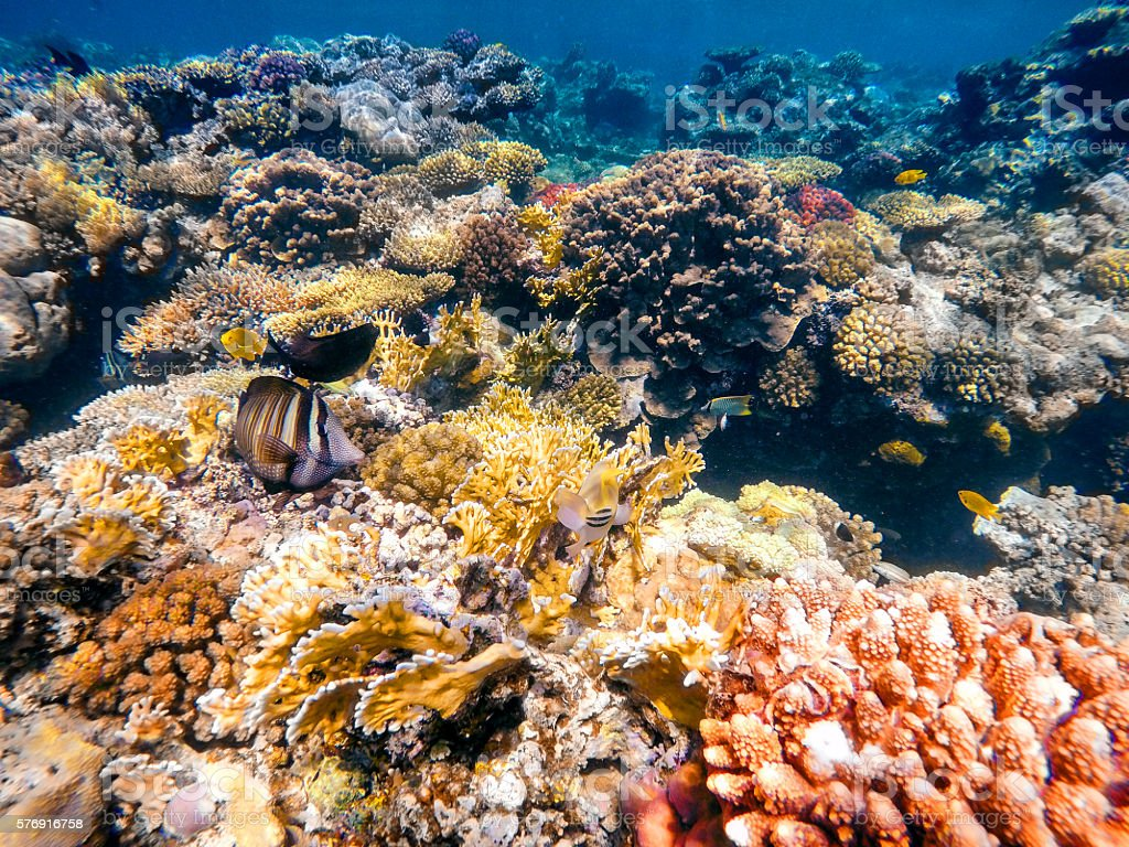 Coral and fish in the Red Sea. Egypt stock photo