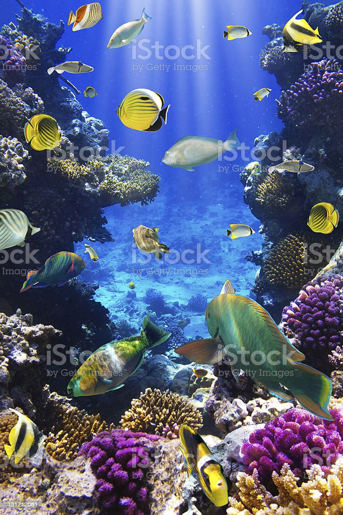 Coral and fish stock photo