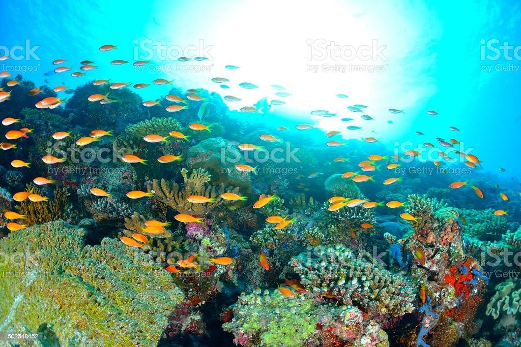 Coral e Peixe foto de stock royalty-free